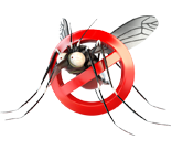 ban-mosquito-aedes